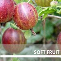 Soft Fruit Block Plants page