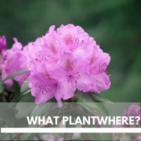 What Plant Where Plants Block Plants page