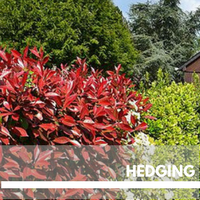 hedging Block Plants page
