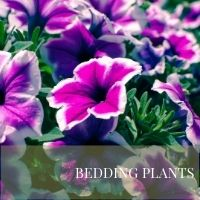 Block Bedding Plants page
