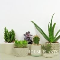 Block House Plants page
