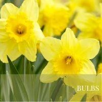 Bulbs Block Plants page