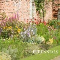Perennials Block Plants page