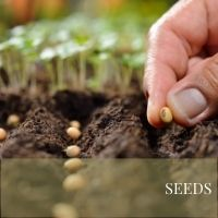 SEEDS Block Plants page