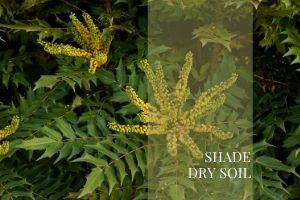 Shade Dry