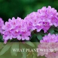 What Plant Where Block Plants page